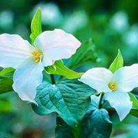 Fernwood Yoga @ Fernwood Botanical Gardens